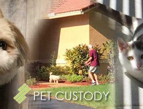 PET CUSTODY – Is this even a thing?