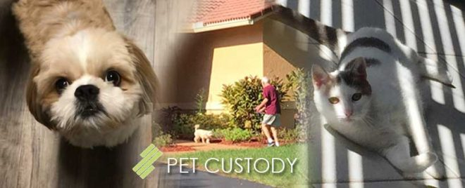 seff-capizzi_blog_Pet_Custody